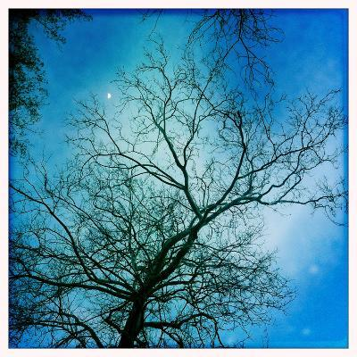 The Moon Behind a Bare Sycamore Tree-Skip Brown-Photographic Print