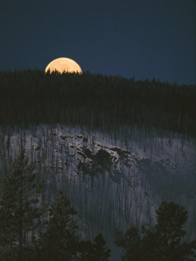 The Moon on the Horizon of a Hillside Covered with Lodgepole Pine Trees-Tom Murphy-Photographic Print