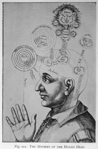 The Mystery of the Human Head