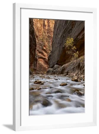 The Narrows of the Virgin River in the Fall-James Hager-Framed Photographic Print