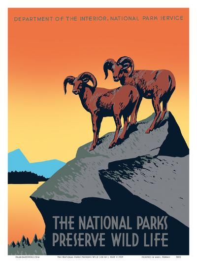The National Parks Preserve Wild Life - Bighorn Sheep-J^ Hirt-Art Print