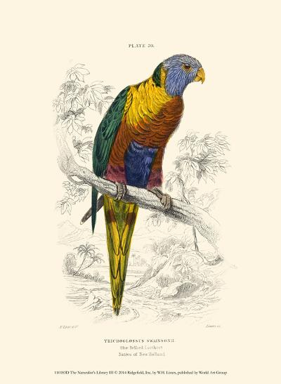 The Naturalist's Library III-W^h^ Lizars-Art Print