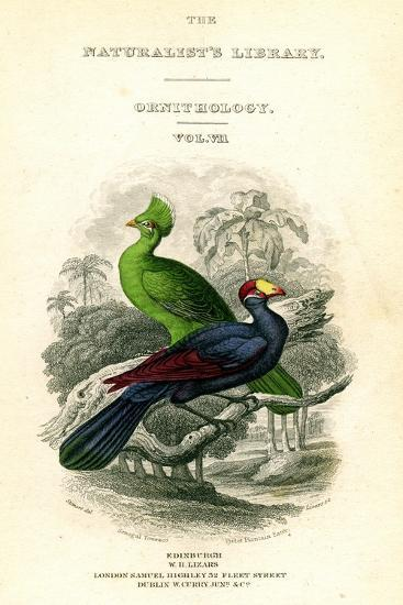 The Naturalist's Library, Ornithology, Senegal Touraco, Violet Plantain Eater, C1833-1865-William Home Lizars-Giclee Print