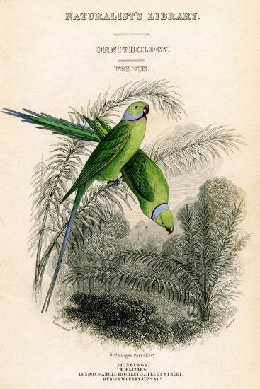 The Naturalist's Library, Ornithology Vol VIII, Red Ringed Parrakeet, C1833-1865-William Home Lizars-Giclee Print