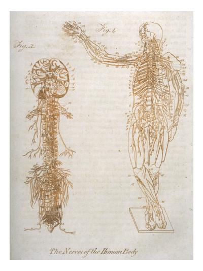 The Nervous System--Giclee Print
