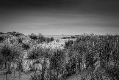 The Netherlands, Frisia, Terschelling, Dunes, Beach, Sea-Ingo Boelter-Photographic Print