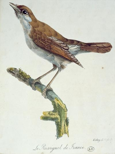 The Nightingale of France, C.1830-Paul Louis Oudart-Giclee Print