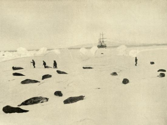 'The Nimrod at Pram Point on March 4, 1909'-Unknown-Photographic Print