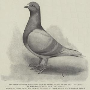 The North Middlesex Flying Club Show of Homing Pigeons at the Royal Aquarium