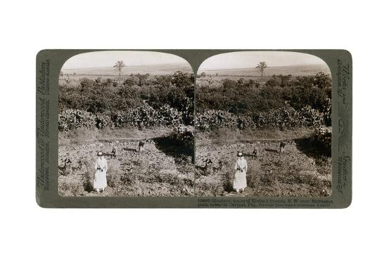 The North-West View from Shunem, across the Plain of Esdraelon, Towards Carmel, 1900s-Underwood & Underwood-Giclee Print