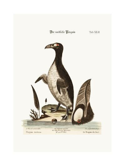 The Northern Penguin, 1749-73-George Edwards-Giclee Print