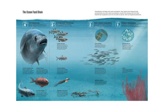The Ocean Food Chain; Predators, Consumers and Producers-Hernan Canellas-Giclee Print