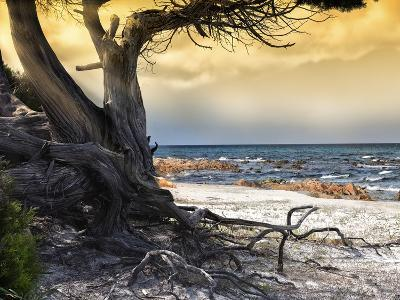 The Old Tree and the Sea-Marco Carmassi-Photographic Print
