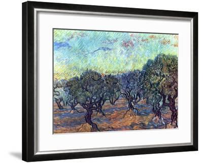 The Olive Grove, c.1889-Vincent van Gogh-Framed Art Print
