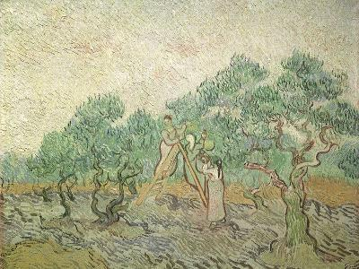 The Olive Orchard, 1889-Vincent van Gogh-Giclee Print