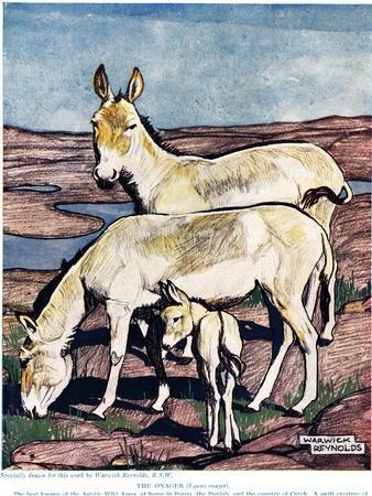 https://imgc.artprintimages.com/img/print/the-onager-from-the-new-natural-history-by-john-arthur-thompson-1861-1_u-l-pjjzqt0.jpg?p=0