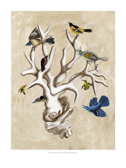 The Ornithologist's Dream II-Naomi McCavitt-Art Print