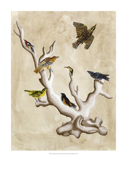 The Ornithologist's Dream III-Naomi McCavitt-Art Print