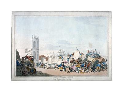 The Overdrove Ox, 1790-Thomas Rowlandson-Giclee Print