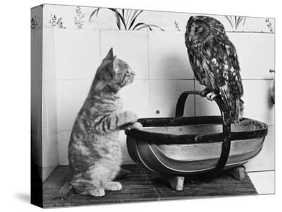 The Owl and the Pussycat: 'Wake Up, Aren't You Even a Bit Scared of Me, Owl?'