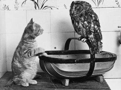 The Owl and the Pussycat: 'Wake Up, Aren't You Even a Bit Scared of Me, Owl?'--Photographic Print