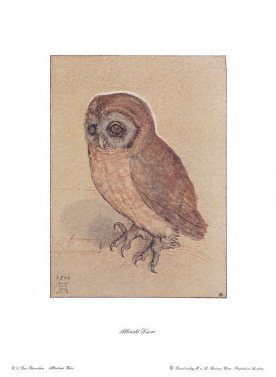 The Owlet-Albrecht D?rer-Art Print