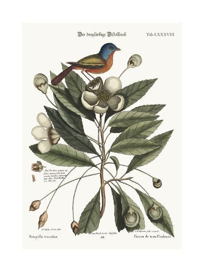 The Painted Finch, 1749-73-Mark Catesby-Giclee Print