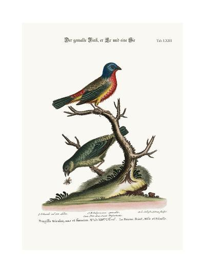 The Painted Finch, Cock and Hen, 1749-73-George Edwards-Giclee Print