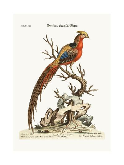 The Painted Pheasant from China, 1749-73-George Edwards-Giclee Print