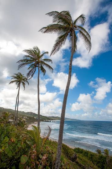 The Palm Lined and Rocky Beach at Bathsheba-Matt Propert-Photographic Print