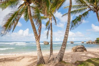 The Palm Lined Beach at Bathsheba-Matt Propert-Photographic Print