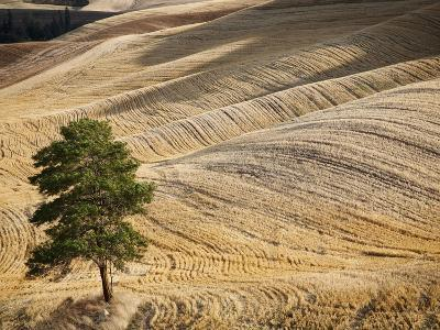 The Palouse Region of the Northwestern United States-Sean Bagshaw-Photographic Print