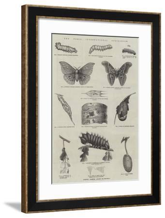The Paris International Exhibition--Framed Giclee Print