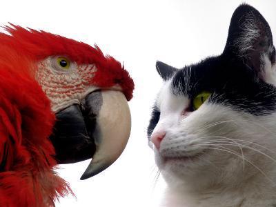 The Parrot and the Cat-Abdul Kadir Audah-Photographic Print