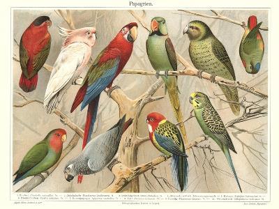 The Parrot Family--Art Print
