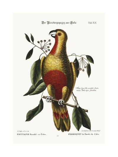 The Parrot of Paradise of Cuba, 1749-73-Mark Catesby-Giclee Print