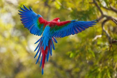 The Parrot-Art Wolfe-Photographic Print