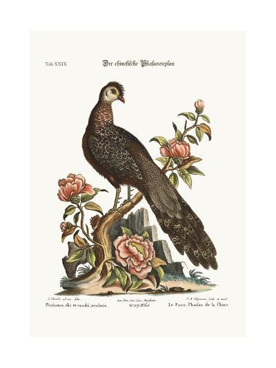 The Peacock Pheasant from China, 1749-73-George Edwards-Giclee Print