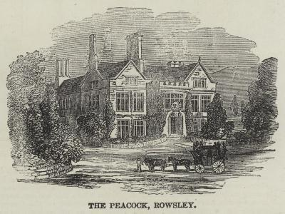 The Peacock, Rowsley--Giclee Print