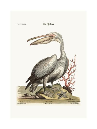 The Pelican, 1749-73-George Edwards-Giclee Print