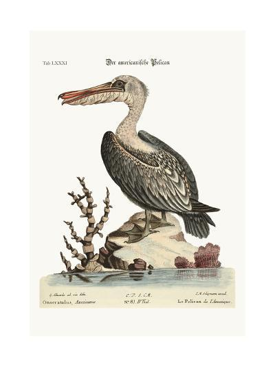 The Pelican of America, 1749-73-George Edwards-Giclee Print