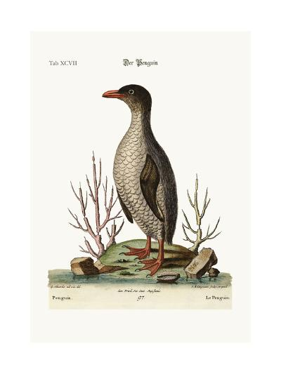The Penguin, 1749-73-George Edwards-Giclee Print