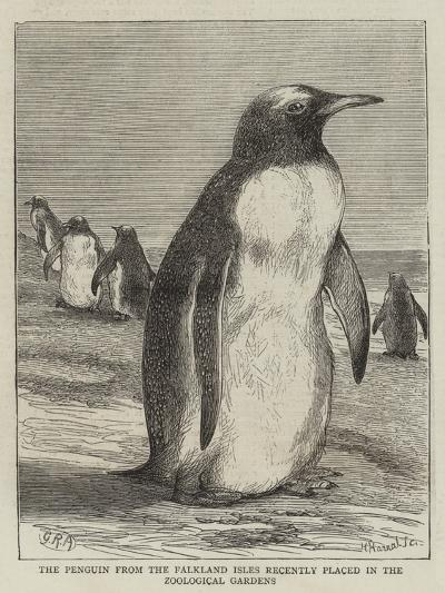 The Penguin from the Falkland Isles Recently Placed in the Zoological Gardens--Giclee Print