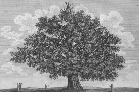 'The Penshurst Oak', 1794-Unknown-Giclee Print