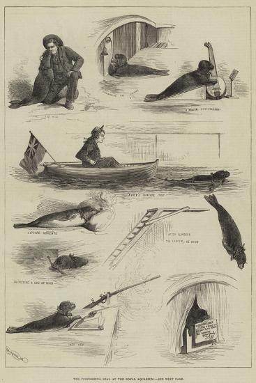 The Performing Seal at the Royal Aquarium--Giclee Print