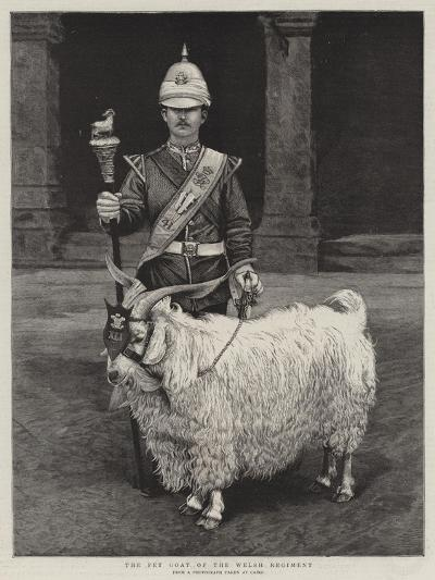 The Pet Goat of the Welsh Regiment--Giclee Print