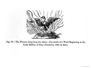 The Phoenix Rising from His Ashes, from a Latin Edition of Pliny Published in Frankfurt in 1602