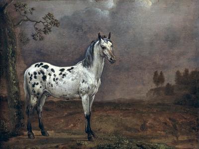 The Piebald Horse, 1653-Paulus Potter-Giclee Print