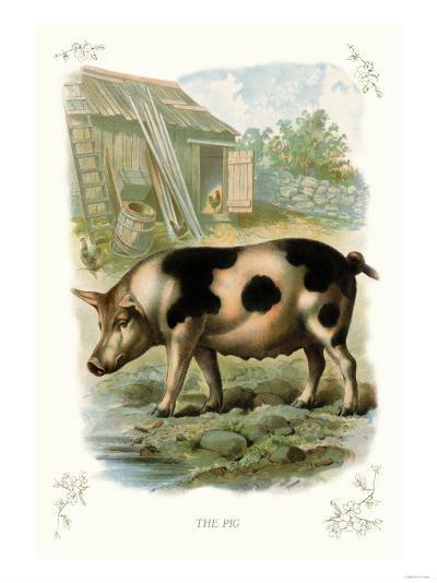The Pig--Art Print