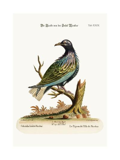 The Pigeon from the Isle of Nicobar, 1749-73-George Edwards-Giclee Print